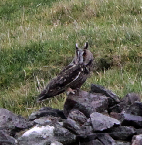 Owl doing looking